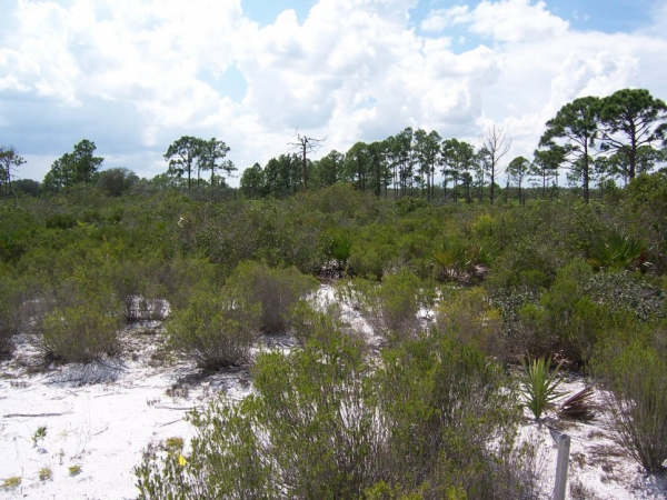 Florida Shrubland Archbold Biological Station