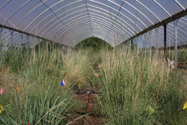 Wildflower Center experiment