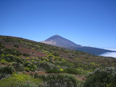 Canary Islands Mt Teide AMF sampling