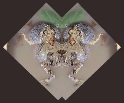 Beaut Tungara Mutant