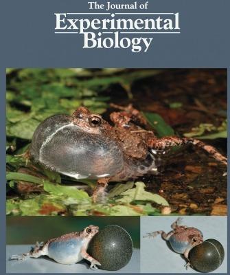 Robo Frog Cover