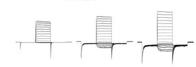 Figure 1C