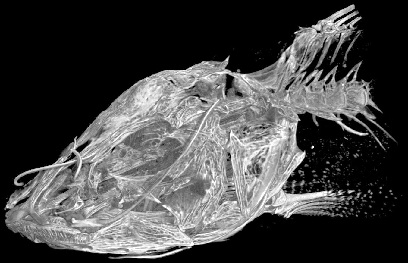 Prietella lundbergi holotype