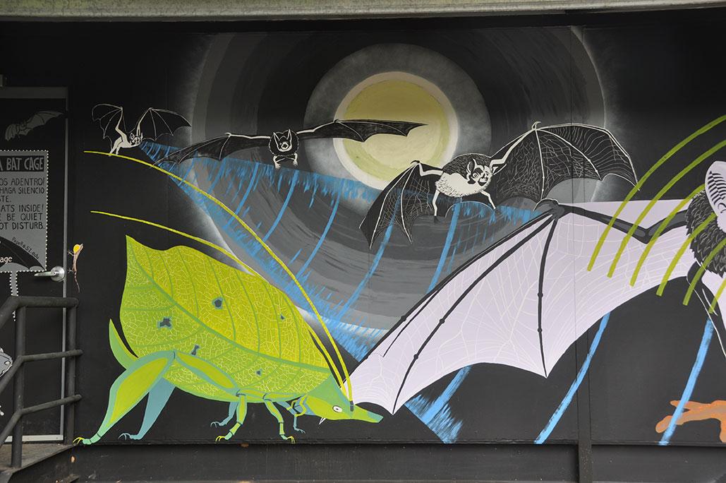 Bat Cage