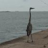 Ocean Conservancy's International Coastal Cleanup - Community Program